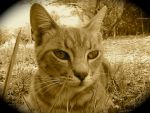 Gab in sepia by Christianonfire7
