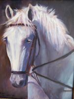 Pretty White Horse by Wulff-Arts