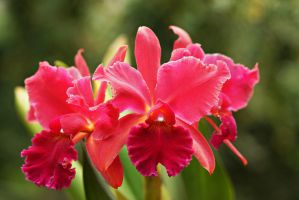 Orchid flowers 33 by a6-k