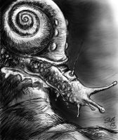 Remote controlled snail by Andalgalornis