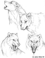 Dyre Loup Sketches by Emryswolf