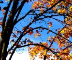 Fall Time Again by SleepSearcher04
