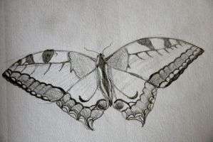 Swallowtail butterfly by artifexus