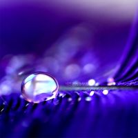 : Violet - drop : by light-from-Emirates