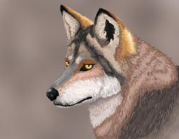Wolf's Glare by wanton-fox