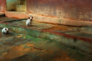 stray cats by poivre