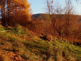 The Late Polish Autumn by Luin-Tinuviel