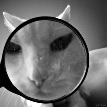 Magnified MoMo by MarinaCoric