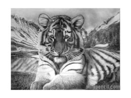 Siberian Tiger Cub by chandito