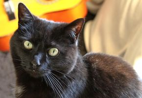 Black Dusty Cat by melemel