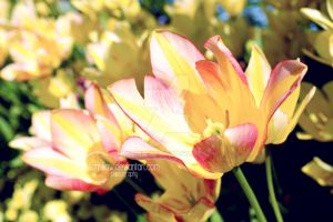 Flower II by Sunhillow