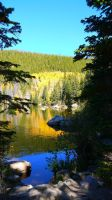 Aspens I, Bear Lake, Rocky Mountain National Park. by PamplemousseCeil