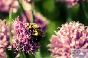 Bumble Bee by AJT-Photography