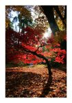 Autumns Sun by JRose-Photography