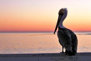 pelican by CrisisCorps