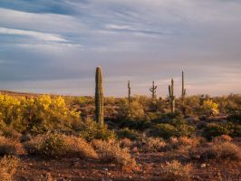 Lost Dutchman VIII by j-ouroboros