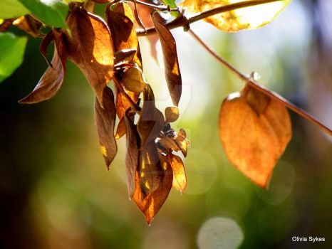 Spring Leaves by standbyme123