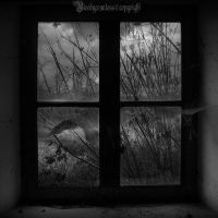 Broken window by CountessBloody