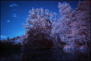 First IR Photo by woopidoo2