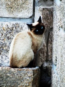 Siamese Neighbour by MyFotoYourPrint