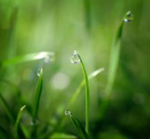 Morning drops by ApoTerra