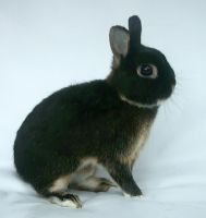 brown speckled bunny 4 by shnarfle-stock