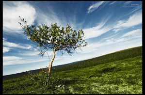 Evergreen by RS-foto
