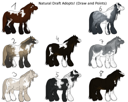 Draft Adopts - Draw and Points by TuttibirdArts