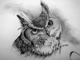 Great Horned Owl by pikasso1989