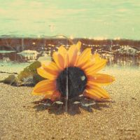 Sunflower: Vintage by Mambalicious