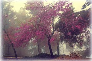 Tree in haze by ShlomitMessica