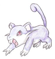 019 Rattata by PokemonForeverFan