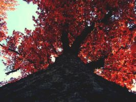 October Red by tinabob