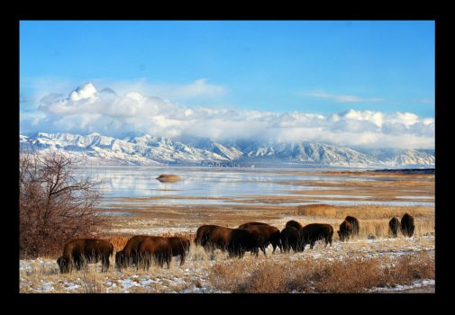 Across the Salt Lake by AngelsLust