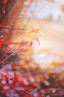 Autumn spirit by Aloony89