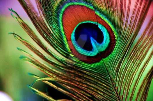 The Peacock Feather by VampirexAcidxTrip