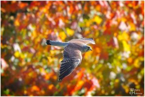 2014 - 01 Autumn by W0LLE