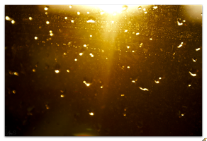 Golden by Andrey-S