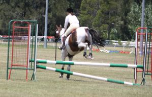 STOCK Showjumping 389 by aussiegal7