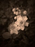 TATTERED ( SEPIA ) by ANDYBURGESS