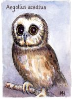 Saw-wet owl, Original ACEO by MarkRHansen