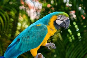 Parrot by Dustinpg
