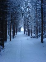 Forest Path by CricetusCricetus