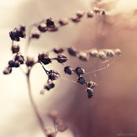 Vieille branche by Sweet-Nature