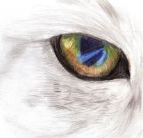 cat's eye by AyshaArts