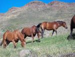 Horses on the hill - Caballos en el cerro by Johnny-Aza