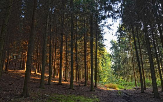 .: Dark Forest :. by Frank-Beer