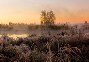 Frosty Morning by DeingeL