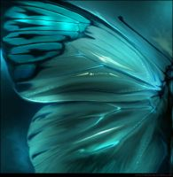 Butterfly 005 by inventivedreams