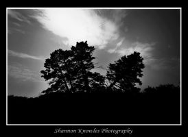 Separated Trees by ShanKnow